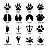 Svarta fotspårformer av djur Elefant, leopard, reptil och tiger royaltyfri illustrationer