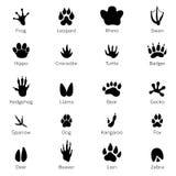 Svarta fotspårformer av djur Elefant, leopard, reptil och tiger Olika moment royaltyfri illustrationer