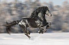 Svarta Friesianhästkörningar galopperar på suddig vinterbakgrund royaltyfri foto
