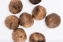 Svarta Garlics på vit bakgrund Fotografering för Bildbyråer