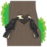 Svarta hornbills är trogna till deras kompisar royaltyfri bild