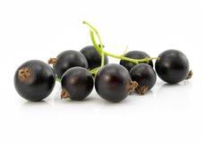svarta isolerade filialvinbärfrukter Arkivbilder