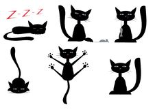 svarta katter Royaltyfri Bild
