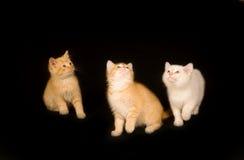 svarta kattungar tre för bakgrund Arkivbilder