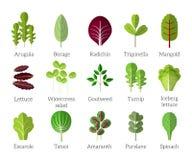 svarta knäpp för sallad för ingrediensgrönsallatolivgrön sockrar tomaten Vektorlägenhet för lövrika grönsaker royaltyfri illustrationer
