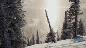 Svarta konturer av träd mot bakgrunden av skoglandskapet stock video