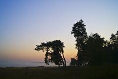 Svarta konturer av träd mot himlen Arkivfoton