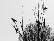 Svarta konturer och former av fåglar och trädet Royaltyfri Bild