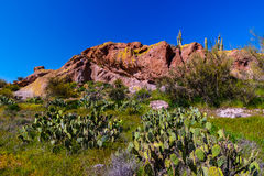 Svarta Mesa Trail Superstition Mountain Wilderness Arizona Royaltyfri Fotografi