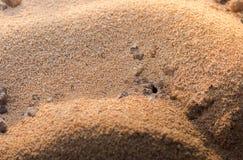 Svarta myror bygga bo i öknen, en myrstack Royaltyfria Bilder