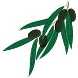 svarta olivgrön Royaltyfri Foto