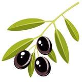 Svarta olivgrön Arkivbilder