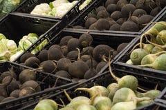 Svarta rädisor på hylla i lager Royaltyfria Bilder