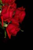 svarta röda ro royaltyfria foton