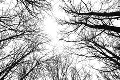 svarta silhouettes Fotografering för Bildbyråer