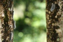 Svarta små avmaskar har vitt hår på träd arkivbild