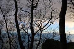 Svarta träd för mystiker Konturer Royaltyfri Foto