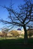 Svarta trädfilialer på blått fjädrar himmelbakgrund, Valencia Spain Royaltyfria Bilder