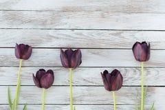 Svarta tulpan på en sjaskig träbakgrund Utrymme för text Royaltyfri Fotografi