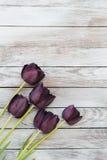 Svarta tulpan på en sjaskig träbakgrund Utrymme för text Royaltyfria Bilder