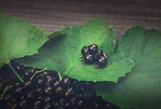 Svarta vinbär överhopar closeupen på lantlig wood bakgrund Arkivbild