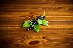 Svarta vinbär för mogna bär Royaltyfria Foton