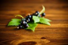 Svarta vinbär för mogna bär Arkivfoto