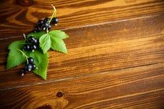 Svarta vinbär för mogna bär Royaltyfri Bild