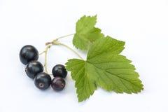 Svarta vinbär på vit med bladet Arkivbild