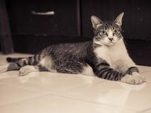 Svarta vita Cat Lying på golv Arkivfoton