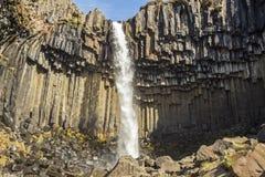 Svartifoss瀑布 免版税图库摄影