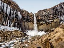 Svartifoss faller Island Fotografering för Bildbyråer