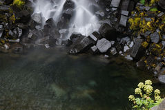 Svartifoss, Islândia Fotos de Stock