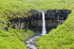 Svartifoss siklawa w Skaftafell z parą - Iceland zdjęcia stock