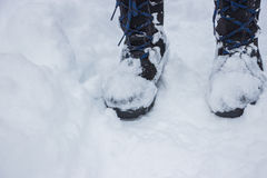 Svartkängor på snön Arkivbild