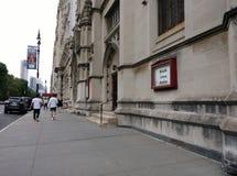 Svartlivfråga, NYC, NY, USA Royaltyfri Foto