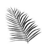 Svartsidor av palmträdet royaltyfri fotografi