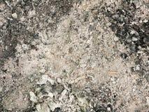Svartvit aska på golvet Royaltyfria Bilder