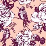 Svartvit attraktionörnkolibri royaltyfri illustrationer