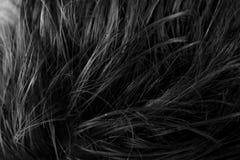 Svartvit bild av luddig frisyrtextur royaltyfri foto