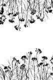 Svartvit bild för ram av växter med knoppar Arkivfoto
