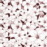 Svartvit blom- abstrakt bakgrund Royaltyfri Fotografi
