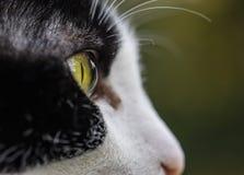 Svartvit closeup för kattöga royaltyfri bild