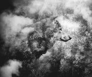 Svartvit collage: Wolf Head och Misty Forest arkivbilder