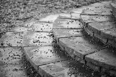 Svartvit detaljbild av moment för regenskapperioddesign in i Fotografering för Bildbyråer