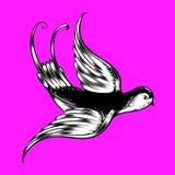 Svartvit fågel på purpurfärgade rosa färger royaltyfria foton