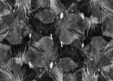 Svartvit fjäderbakgrund Royaltyfri Fotografi
