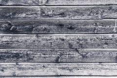 Svartvit gammal tr?textur med naturlig modellbakgrund royaltyfri bild