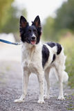 Svartvit hund. Arkivfoto