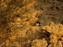 Svartvit inhemsk katt på bergen Royaltyfri Fotografi